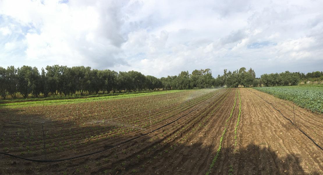 azienda-agricola-podda-monastir-cagliari-sardegna