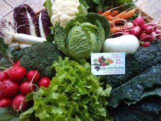 fornitura-verdure-0