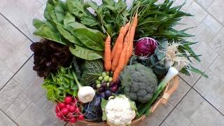fornitura-verdure-1