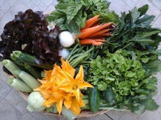 fornitura-verdure-2