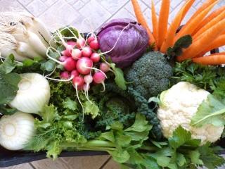 fornitura-verdure-4