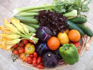 fornitura-verdure-5