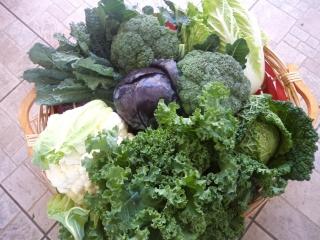 fornitura-verdure-6