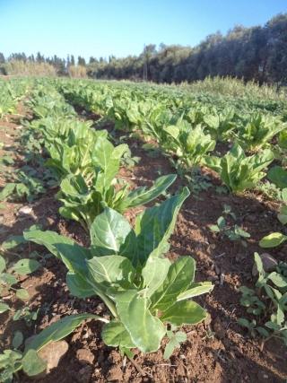 prodotti-agricoli-monastir-cagliari-15