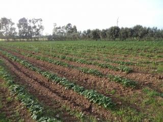 prodotti-agricoli-monastir-cagliari-16