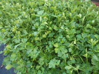 prodotti-agricoli-monastir-cagliari-19