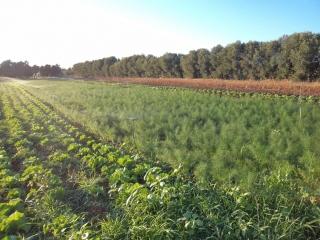 prodotti-agricoli-monastir-cagliari-29