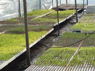 prodotti-agricoli-monastir-cagliari-33