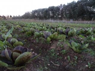 prodotti-agricoli-monastir-cagliari-4