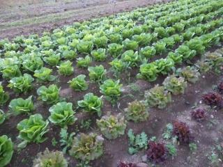 prodotti-agricoli-monastir-cagliari-5