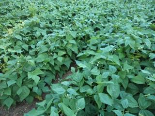 prodotti-agricoli-monastir-cagliari-pomodori