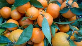 arance-agricoltore-monastir-cagliari-7