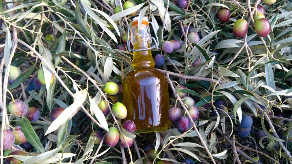 olio-agricoltore-monastir-cagliari-2