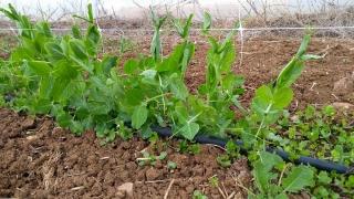 verdura-agricoltore-monastir-cagliari-12