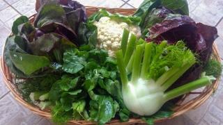 verdura-agricoltore-monastir-cagliari-5