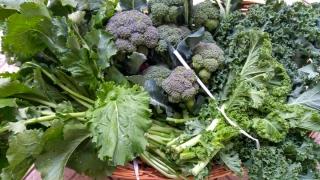 verdura-broccoli-e-cavoli-agricoltore-monastir-cagliari-18