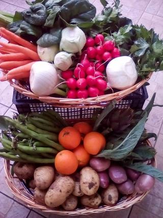 verdure-agricoltore-monastir-cagliari-13