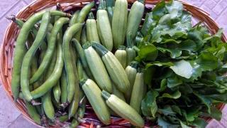 zucchine-e-altre-verdure-agricoltore-monastir-cagliari-10